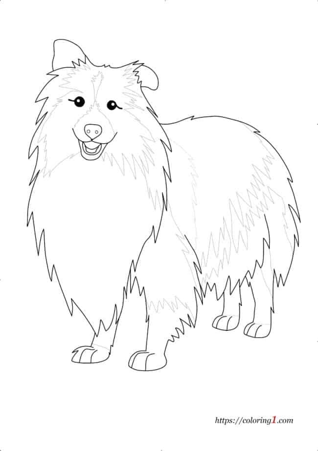Realistic Dog Shetland Sheepdog coloring page