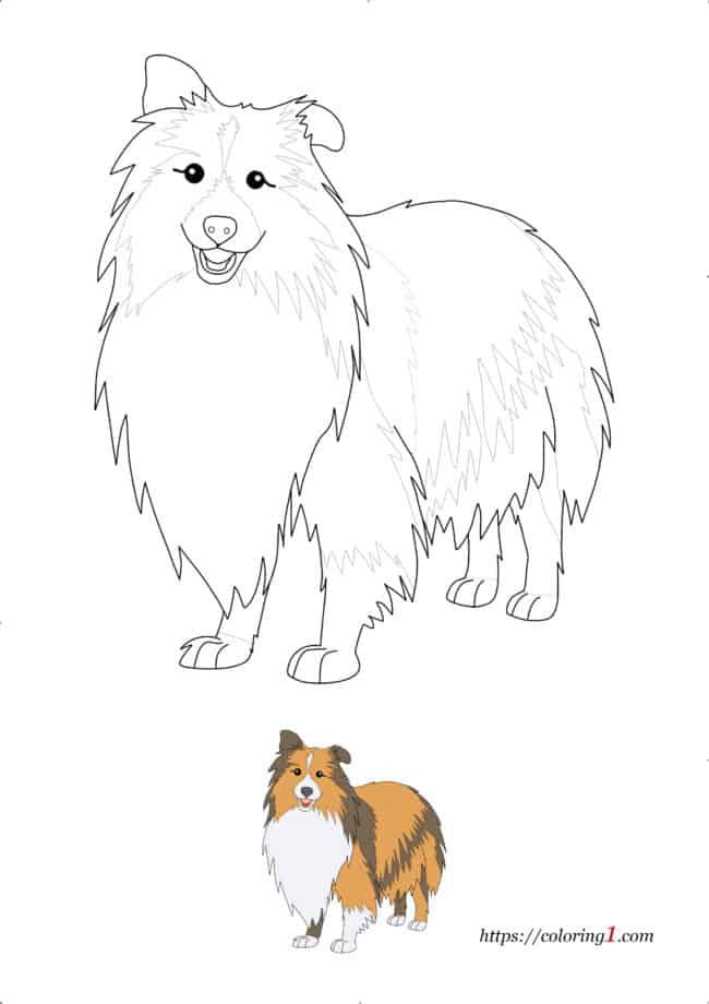 Realistic Dog Shetland Sheepdog Breed coloring page pdf