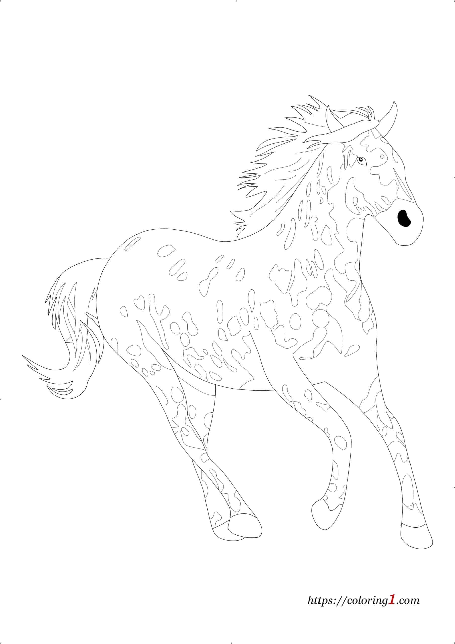 Coloriage Appaloosa Cheval